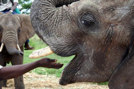 EFAF Elephant