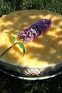 Lemon_cheesecake2