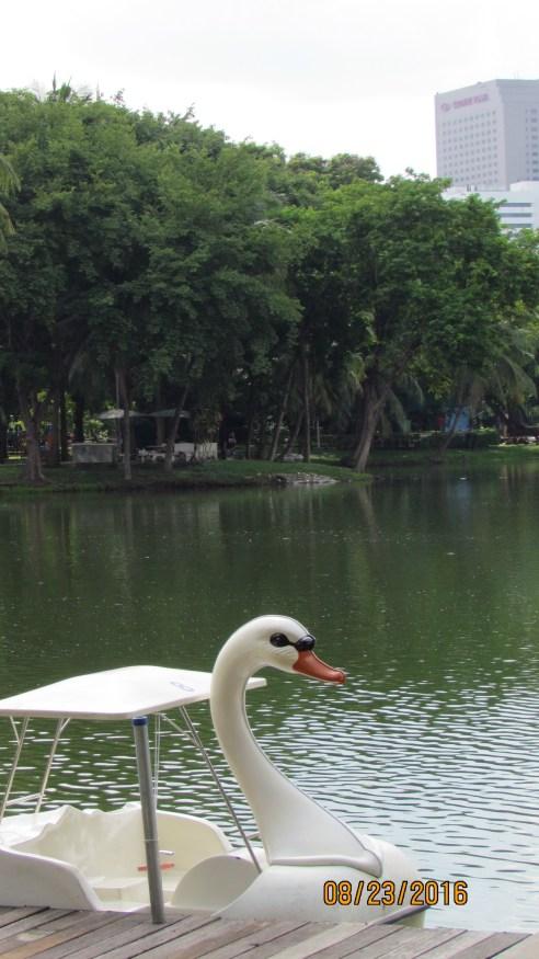 Swan Boats - Lumpini Park - Bangkok