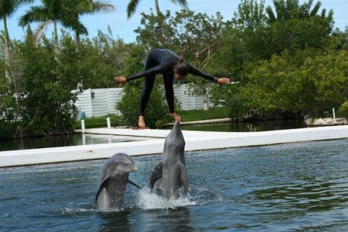 Theatre of the Seas - Dolphins - Florida Keys - Islamorada