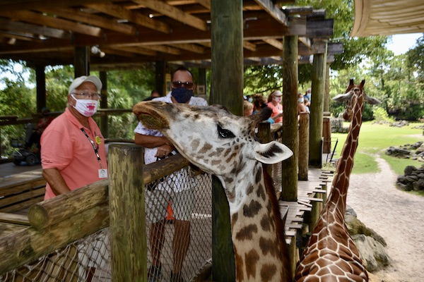Chuck with Brevard zoo staff and one of the giraffes