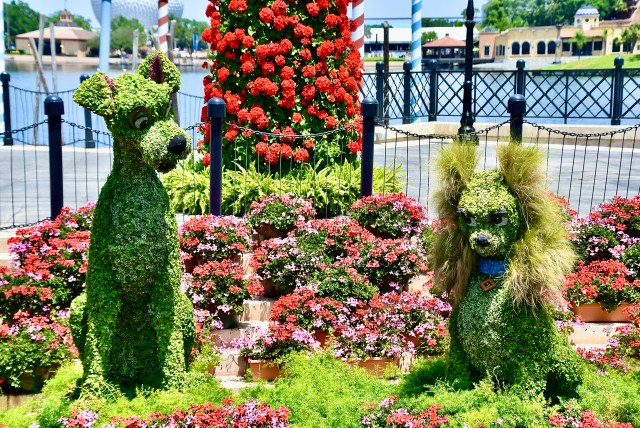Lady and The Tramp topiaries at EPCOT in Walt Disney World