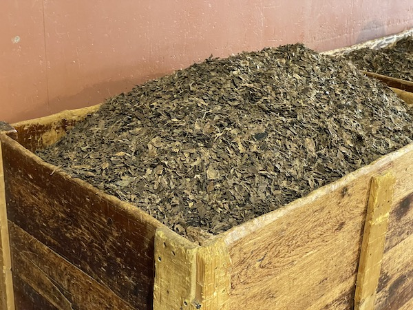 bin filled with filler tobacco for cigars