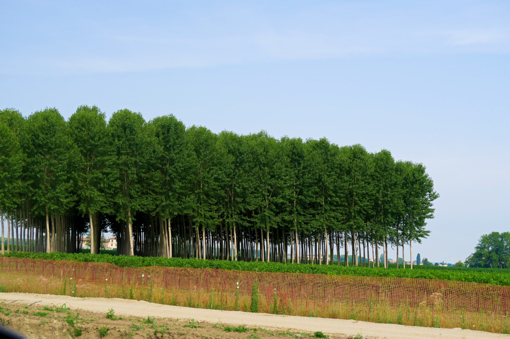 perfect forests on the highway to Venice