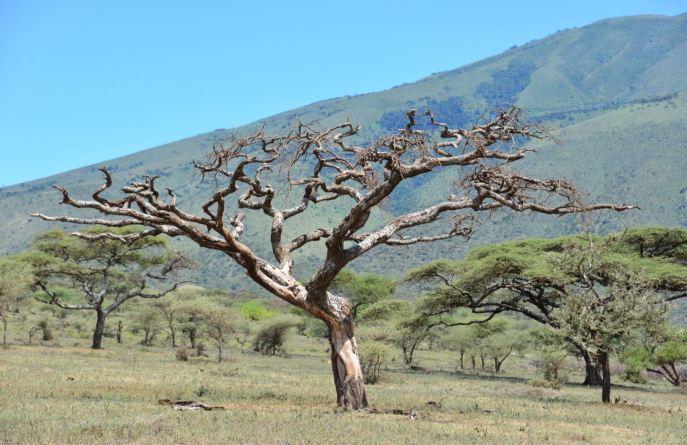 Cap Tree