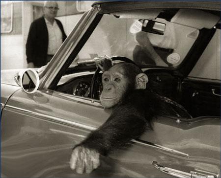 Monkey Driver