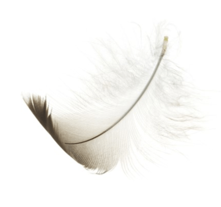 Seagull feather
