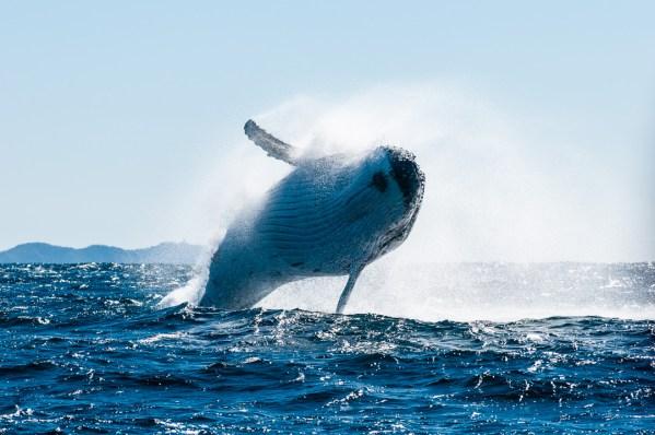 Mark Atkins Photography Whale watching Lennox Head, Byron Bay and Ballina
