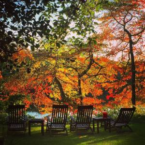 great fall pic