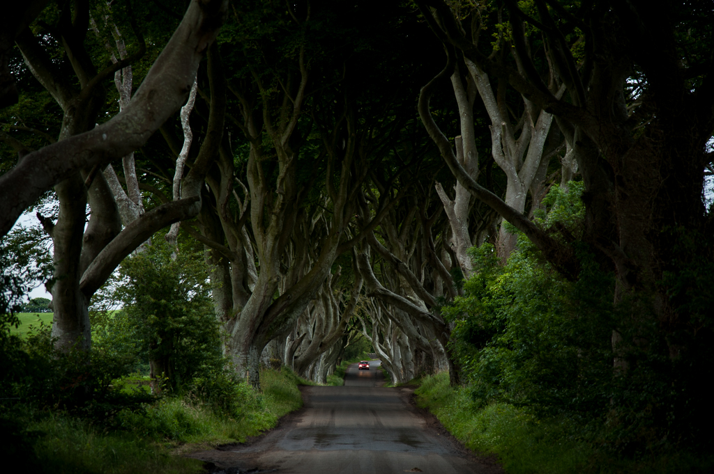 Dark Hedges - Green
