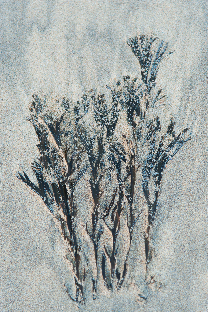 Sandtrees