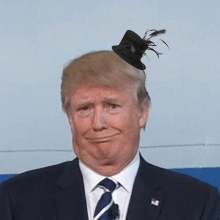 President Trump wearing a small fascinator hat.