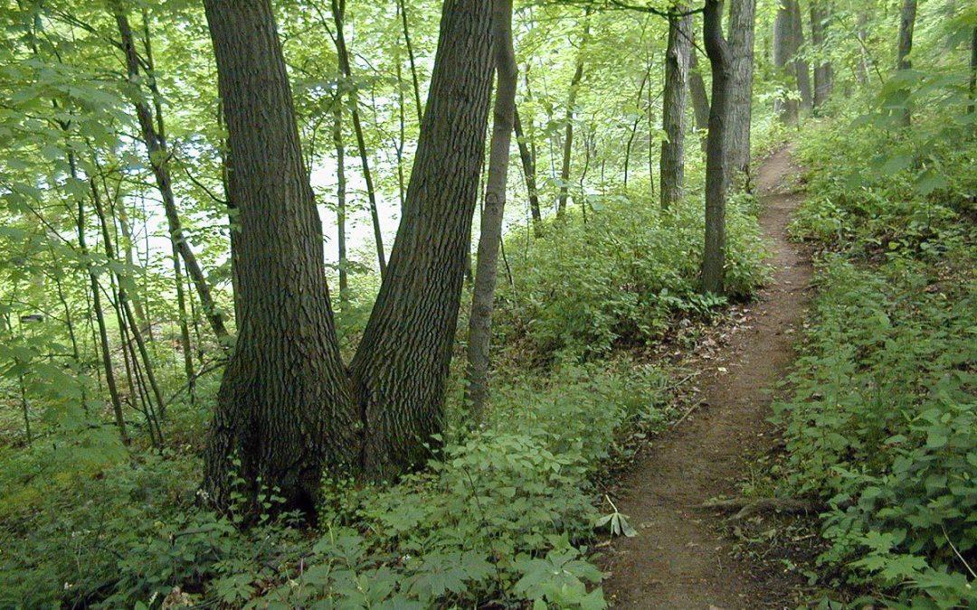 Petrifying Springs hiking trail, June 1999