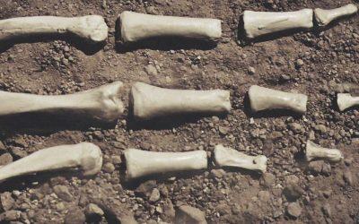 Dry Bones song: Ezekiel cried, 'Dem dry bones!'