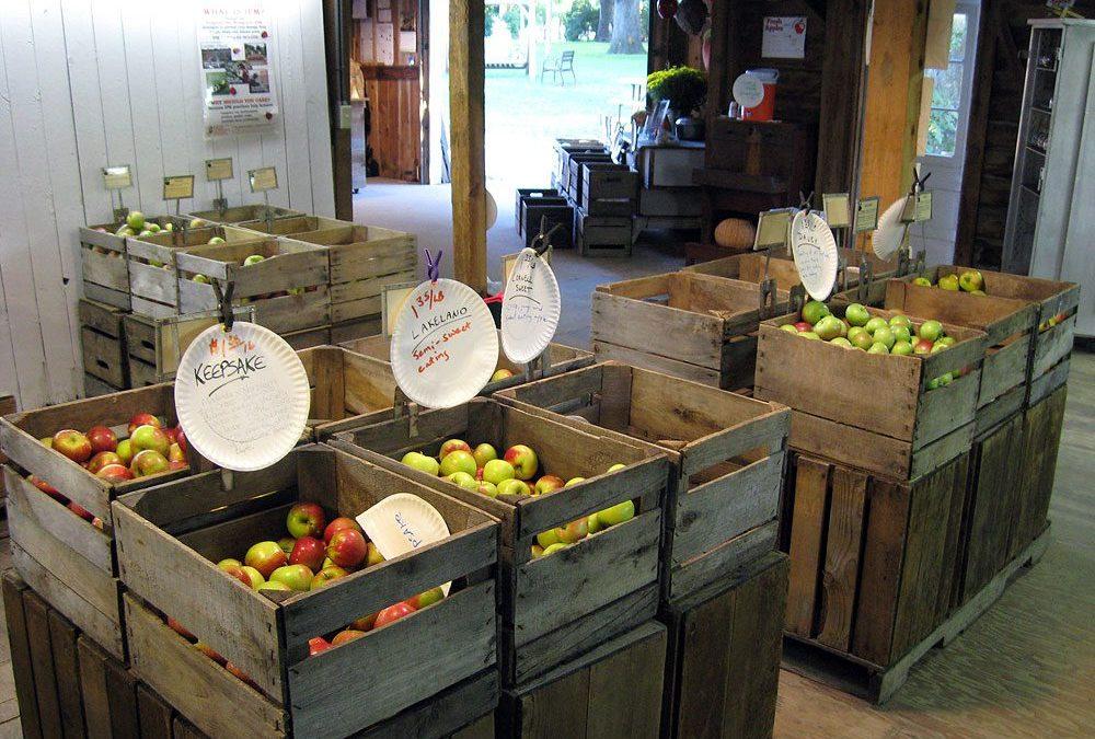Apple orchard near Burlington, WI: Brightonwoods Orchard