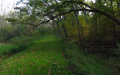 Bristol Woods County Park hiking trail, Bristol, Wisconsin