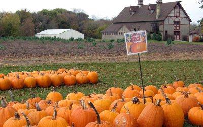 Pumpkins for sale, Racine County, Wisconsin