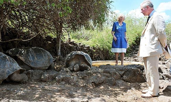 tortoise__01_504724a