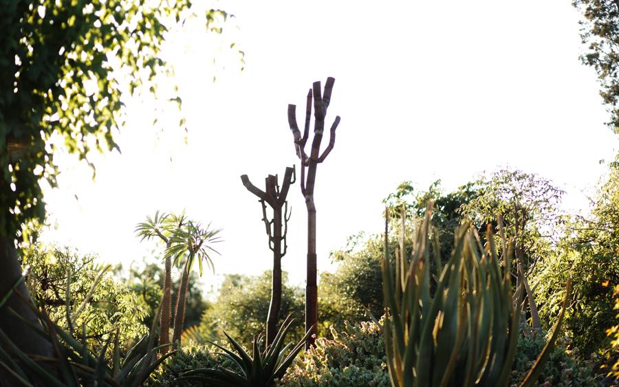 DianaMarkessinis.TreesinSpinyForest3.metal.2012