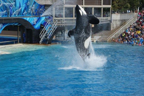 seaworld whale