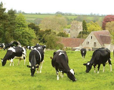 dairy farmers UK