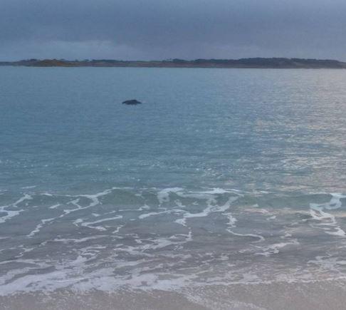 Bowhead Whale pic 1