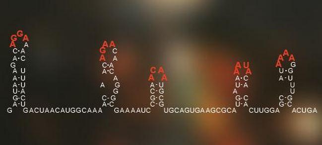 Hidden genetic code