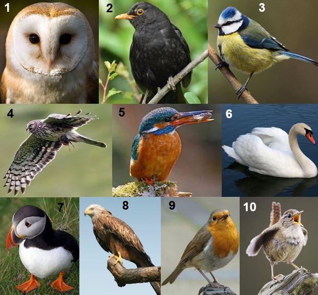 Britain national bird shortlist