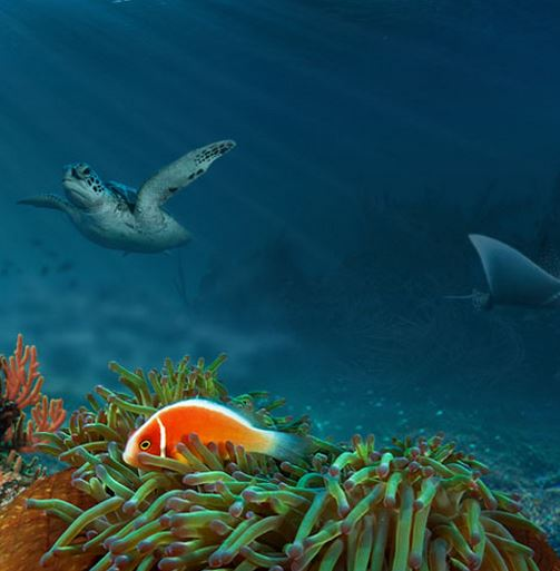 Spectacular Barrier Reef Virtual Dive Being Launched By