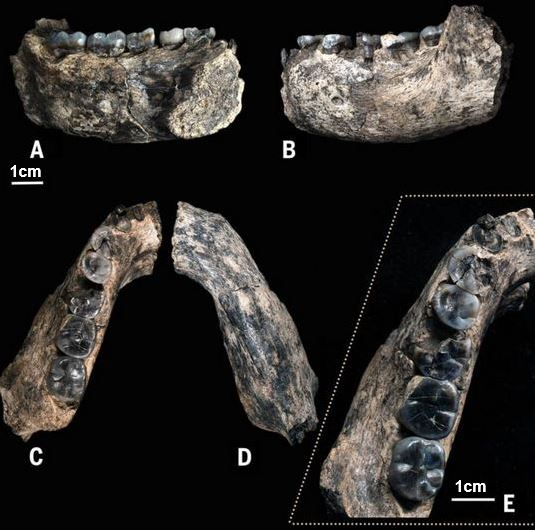 jawbone fossil ethiopia