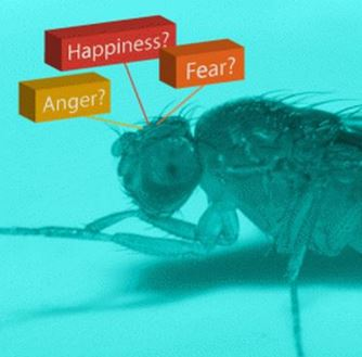 Fly fear