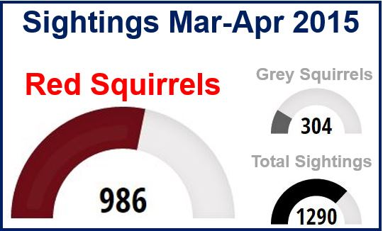 squirrel sightings