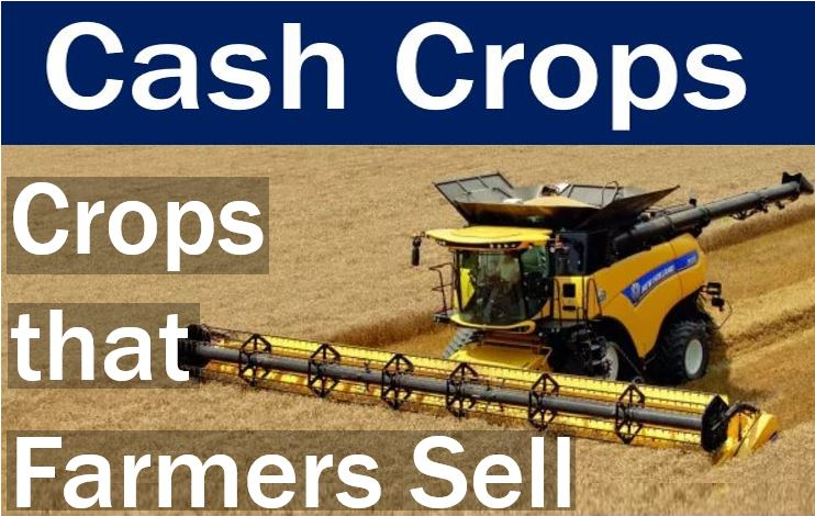 Cash crops - crops that farmers sell