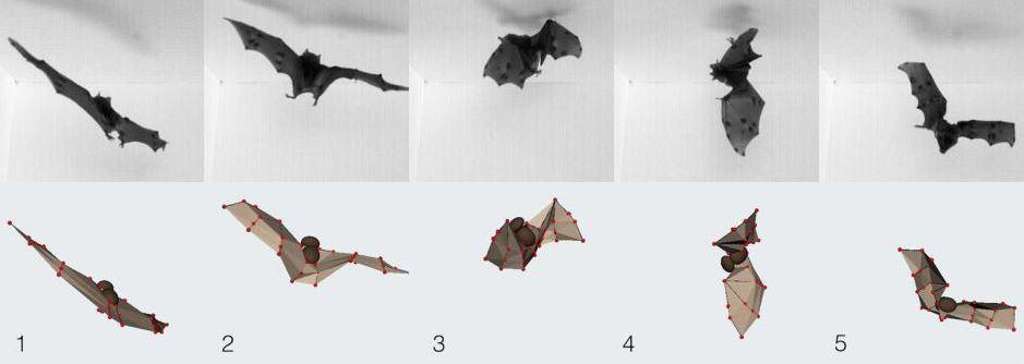 Bats land upside down