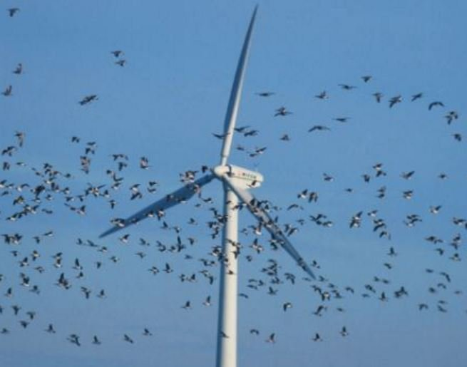 Birds flying into wind turbines