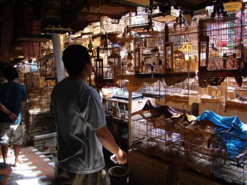 Indonesian bird market