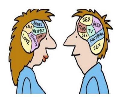 brain sex differences orbitofrontal cortex and fnir in Redcliffe