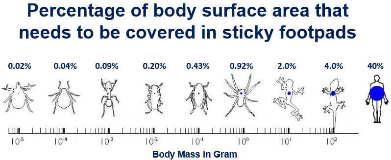Percentage body mass with adhesive pads
