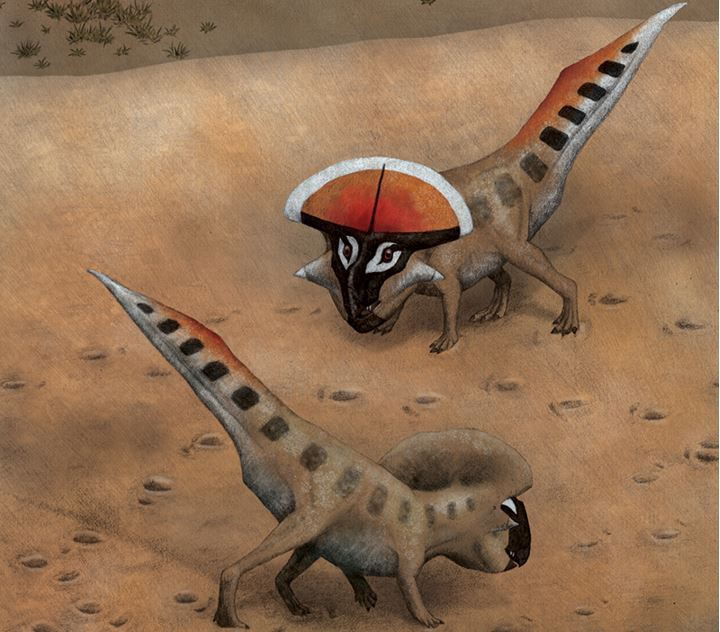 Protoceratops frills sexual display