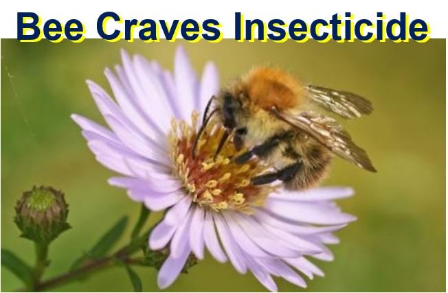 Bee craves insecticide