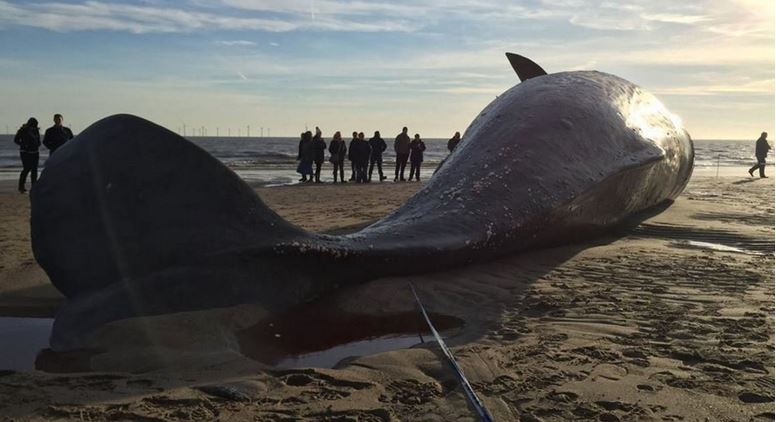Dead whales found along coast of UK