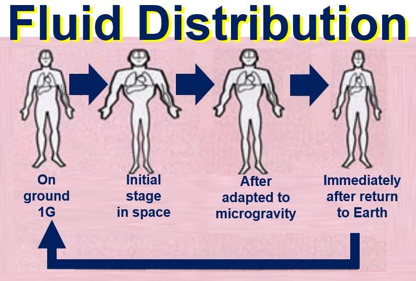 Fluid distribution in space