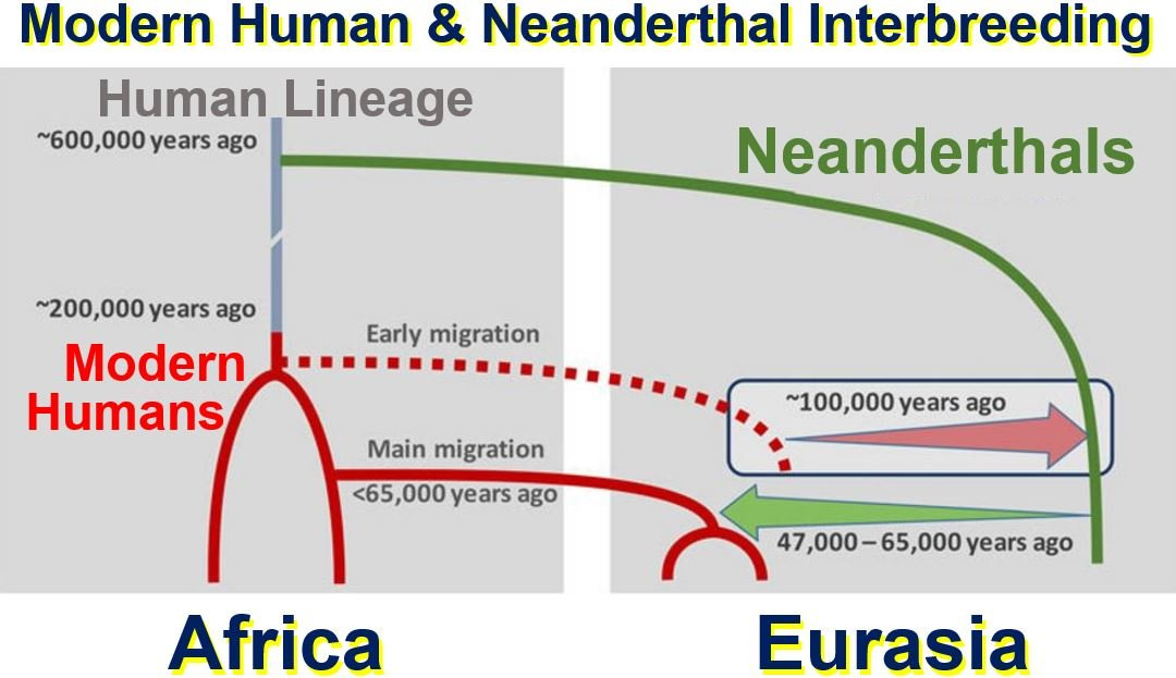 Modern humans and neanderthals interbreeding
