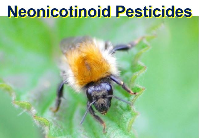 Pesticides and bumble bees