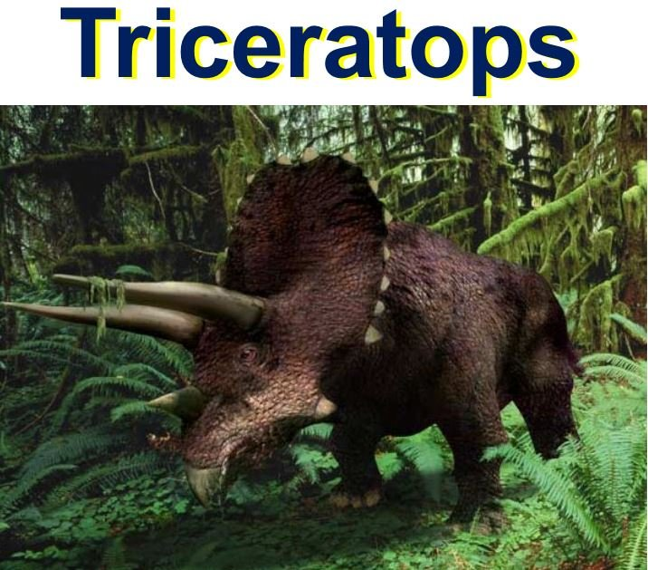 Triceratops a plant eating dinosaur