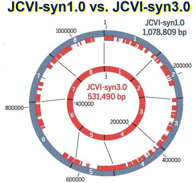 Comparing JCVIsyn1 with with JCVI syn3