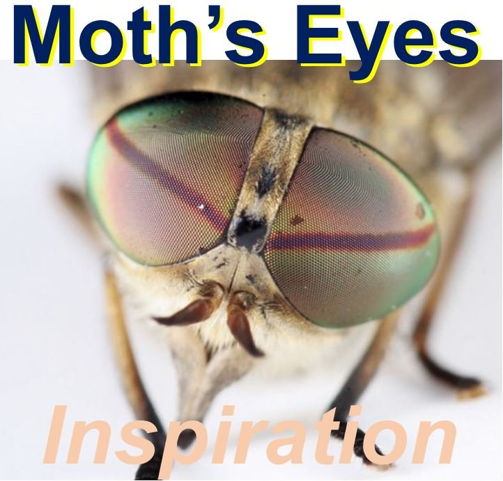 Eyes of moths inspiration