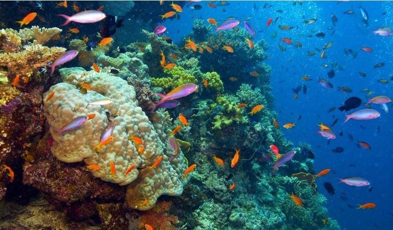 Great Barrier Reef wildlife