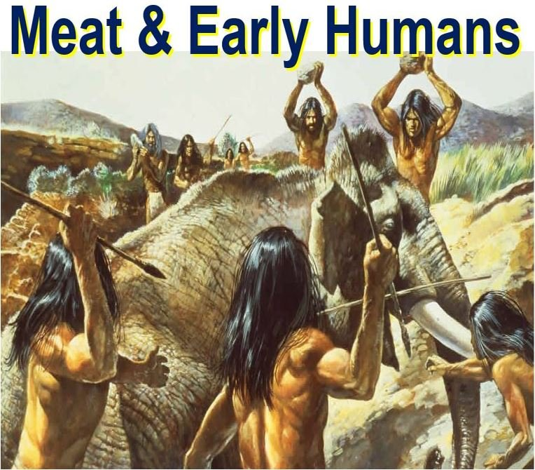Human evolution linked to chewing less due to meat processing