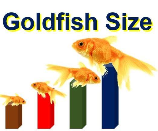Goldfish size